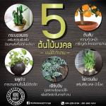 5 ต้นไม้มงคลบนโต๊ะทำงาน ที่จะช่วยเสริมดวงคุณ!