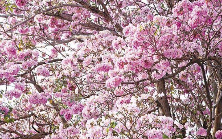 ต้นไม้ที่ควรปลูกห่างจากตัวบ้าน