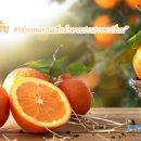 กินส้มวันละผล ช่วยลดความเสี่ยงโรคจอประสาทตาเสื่อมได้